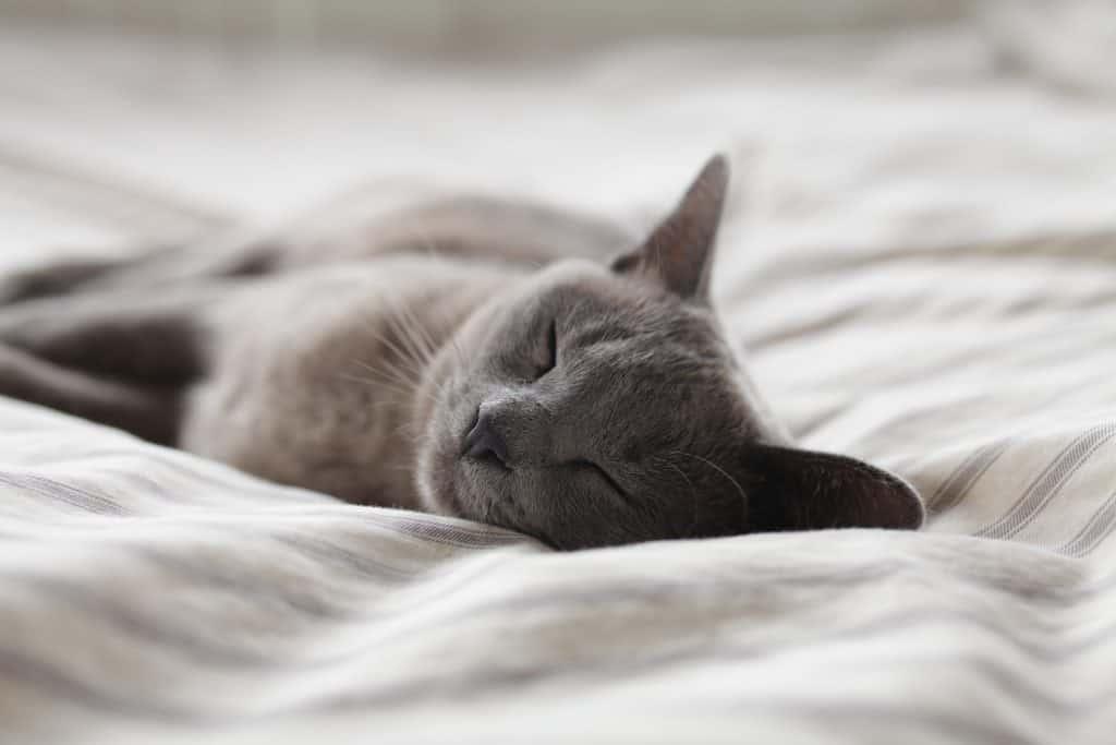 Schlafmangel kann Libidoverlust begünstigen.